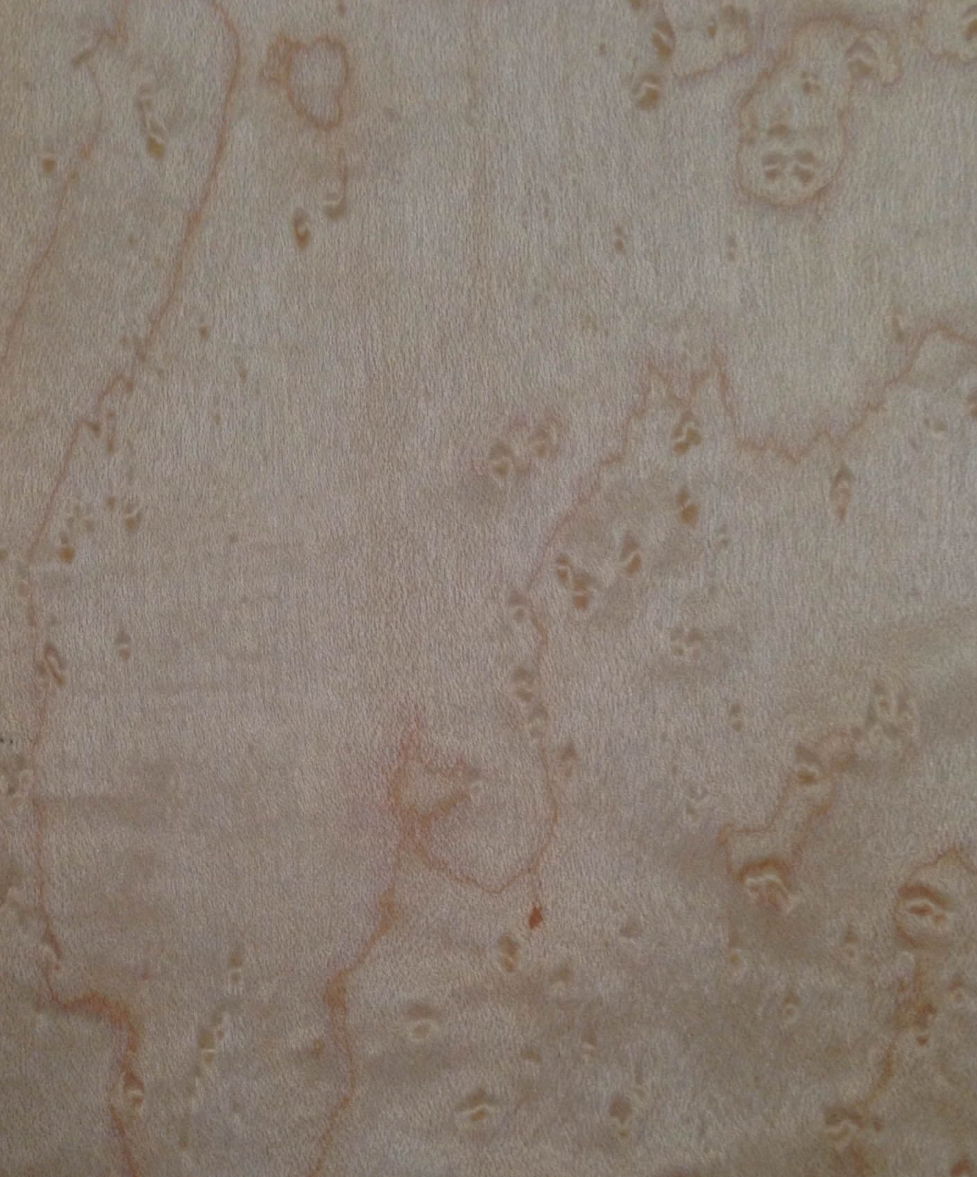 Birds Eye Maple Stained 080628